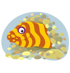 moray vector image