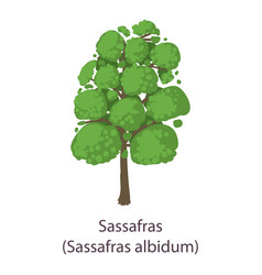 sassafras icon flat style vector image