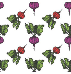 Table beet seamless pattern hand drawn background vector