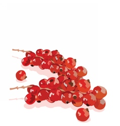Watercolor cranberry branch on white vector