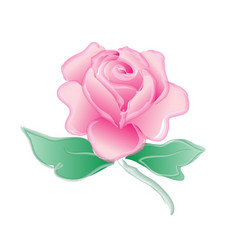 Watercolor rose painting on white background vector