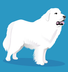 Great pyrenees dog vector