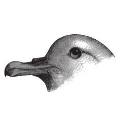 Slender billed fulmar vintage vector