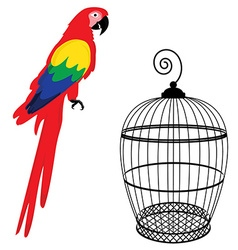Parrot and birdcage vector image vector image