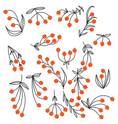 A set various doodle berries with delicate vector