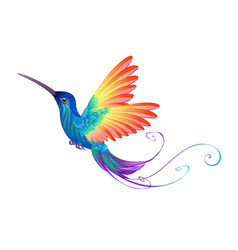 bright rainbow hummingbird vector image