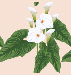 calla lilies flower pattern vector image