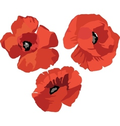 Flower Poppy set vector