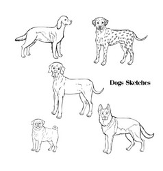 hand drawn dogs sketches vector image