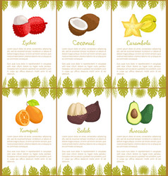 Lychee and coconut carambola posters set vector