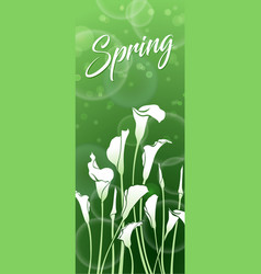 white callas green spring picture vector image