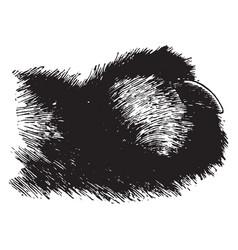 Cat claw vintage vector