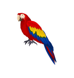 Detailed icon long-tailed macaws ara vector