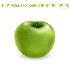 Fresh green apple on a white background vector