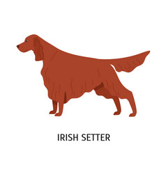 irish setter stunning cute dog of hunting breed vector image