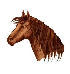 Portrait brown graceful horse mare vector