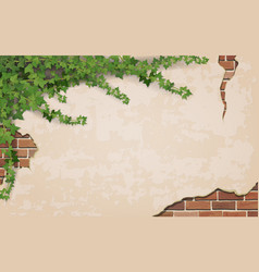ivy on weathered wall background vector image vector image