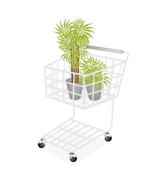 Beautiful Dracaena Plants in A Shopping Cart vector