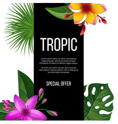 exotic flowers sale banner tropical plants vector image