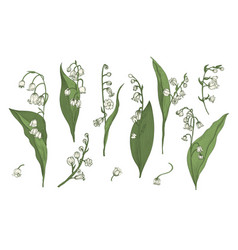 Lily valley realistic collection hand vector
