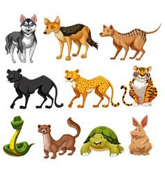 Set animal character vector