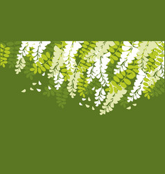 Spring acacia blossom card template vector