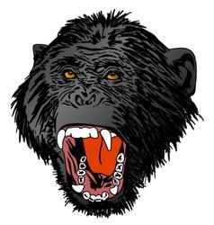 Angry Ape Monkey Gorilla vector image