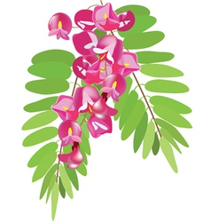 branch of acacia vector image vector image