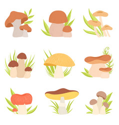 different kinds of mushrooms set forest edible vector image