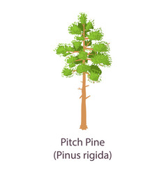 Pitch pine icon flat style vector