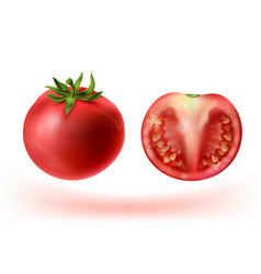 3d realistic set of red tomatoes vector image
