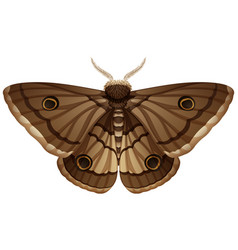 Moth closeup white background vector
