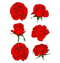Red rose flowers and buds icons isolated on white vector