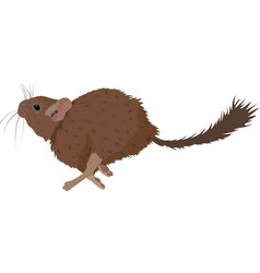 sketch of degu rodent pet vector image