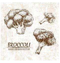 digital broccoli hand drawn vector image
