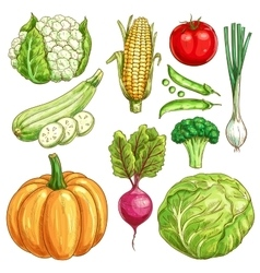 Farm vegetables sketch isolated icons set vector image vector image