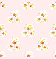 white plum blossom seamless on pink background vector image vector image