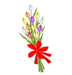 Beautiful Fresh Tulip Bouquet with Red Ribbon vector image