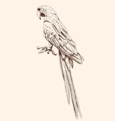 Big macaw parrot vector