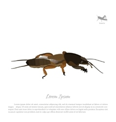 European mole cricket Insect pests vector