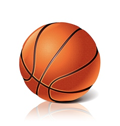 object basketball ball vector image