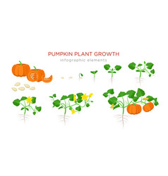 pumpkin plant growth stages infographic elements vector image