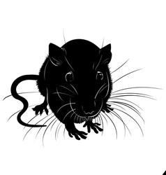 Rats vector