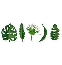 tropical exotic leaves isolated on white vector image