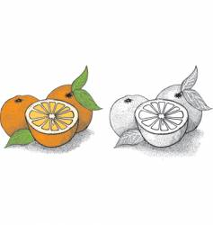 orange illustration vector image vector image
