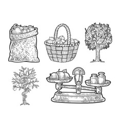 Apple fruits set line art sketch vector