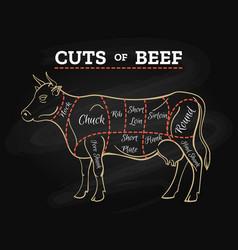 Cow butcher cut beef chalkboard scheme vector