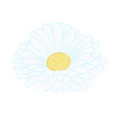 daisy flower isolated on white vector image
