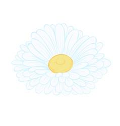 Daisy flower isolated on white vector