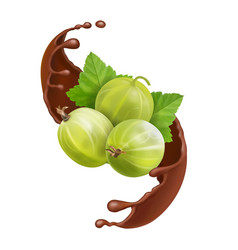 Green gooseberry splash of chocolate vector